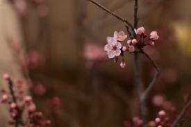 Boulder Creek Flowers-2