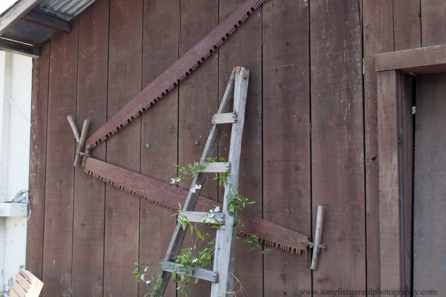 Antique tools on barn