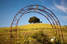 Oak tree on hill photographed through an arch