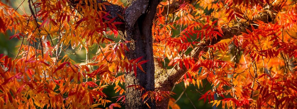 leaves (18 of 18)