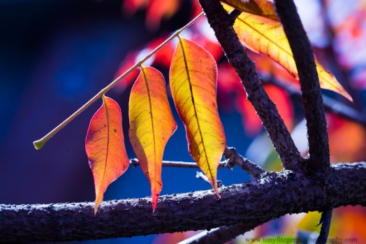 leaves (3 of 18)