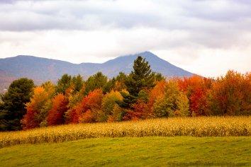 Vermont 2 (2 of 12)